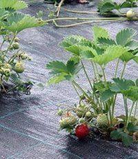 Как применяют геотекстиль для защиты от сорняков